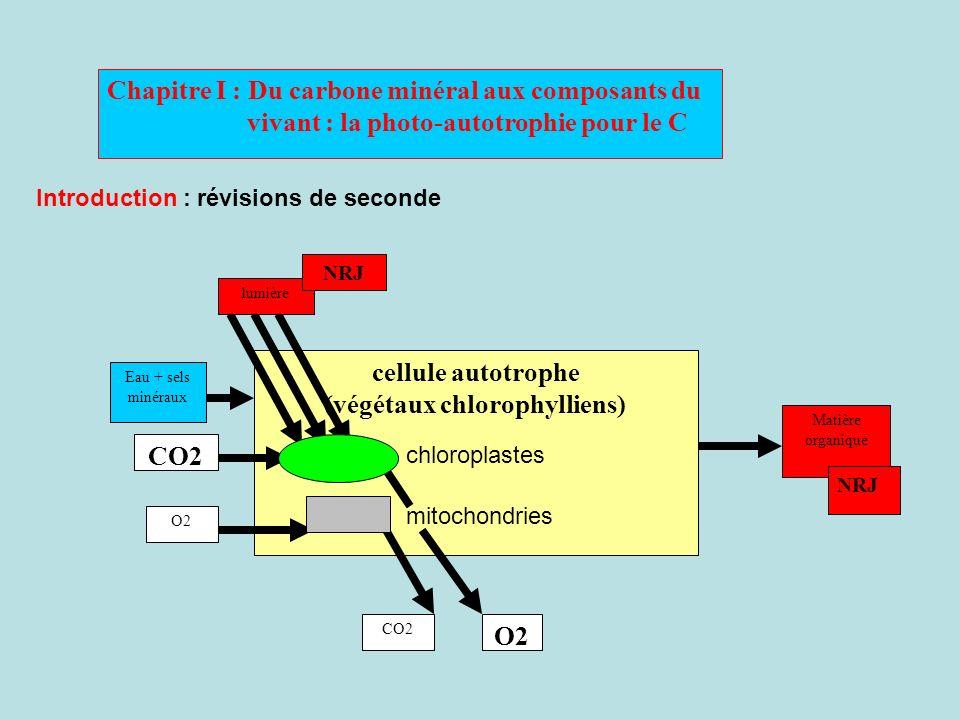 Chapitre I : Du carbone minéral aux composants du vivant : la photo-autotrophie pour le C Introduction : révisions de seconde cellule autotrophe (végé