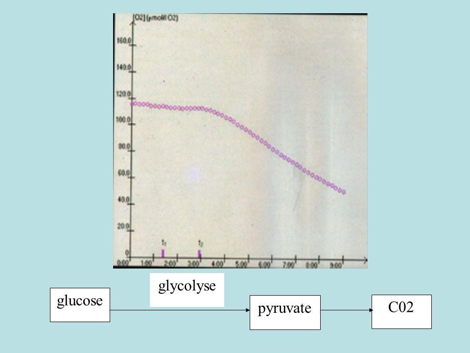 glucose glycolyse pyruvateC02