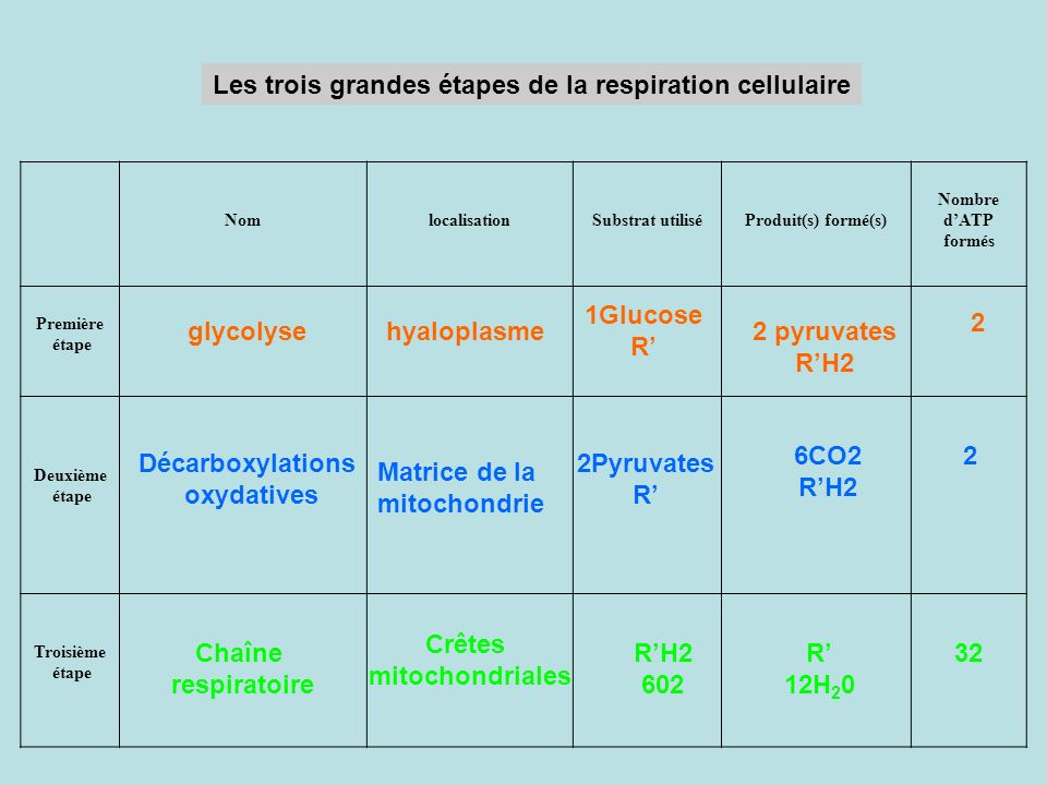 Les trois grandes étapes de la respiration cellulaire NomlocalisationSubstrat utiliséProduit(s) formé(s) Nombre dATP formés Première étape Deuxième ét