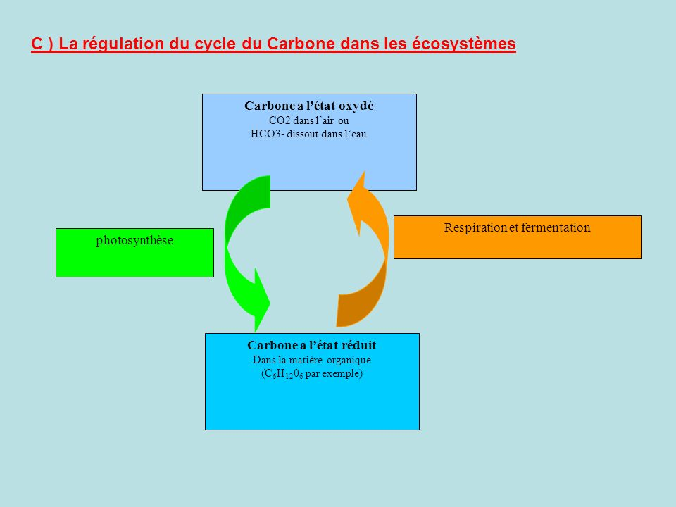 C ) La régulation du cycle du Carbone dans les écosystèmes Carbone a létat oxydé CO2 dans lair ou HCO3- dissout dans leau Carbone a létat réduit Dans