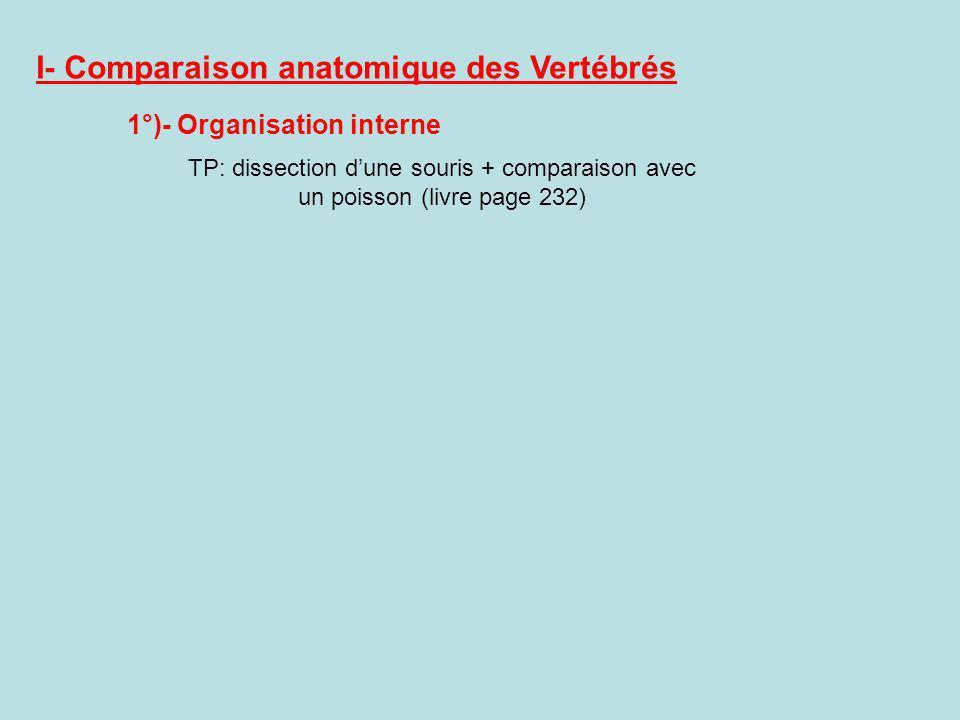 I- Comparaison anatomique des Vertébrés 1°)- Organisation interne TP: dissection dune souris + comparaison avec un poisson (livre page 232)