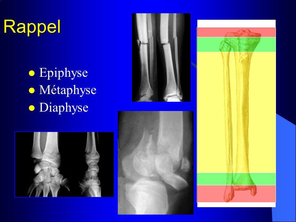 Rappel La diaphyse : Tissu compact épais (cortical ou cortex) Canal médullaire (moelle jaune) Membrane (le périoste) riche en vaisseaux nourriciers (ossification en épaisseur)