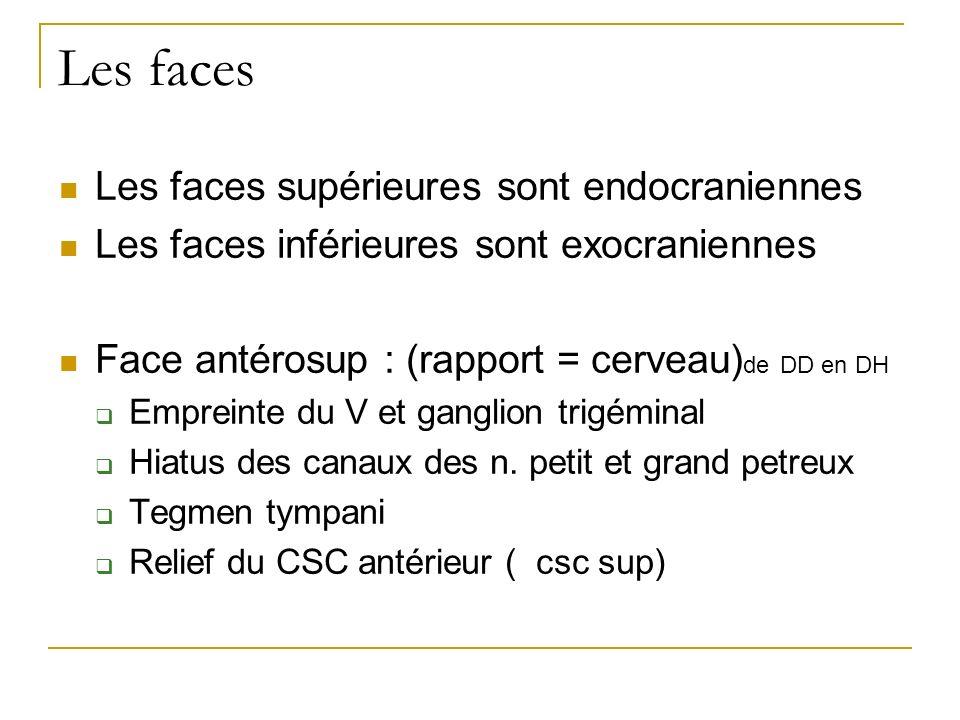 Les faces Les faces supérieures sont endocraniennes Les faces inférieures sont exocraniennes Face antérosup : (rapport = cerveau) de DD en DH Empreinte du V et ganglion trigéminal Hiatus des canaux des n.