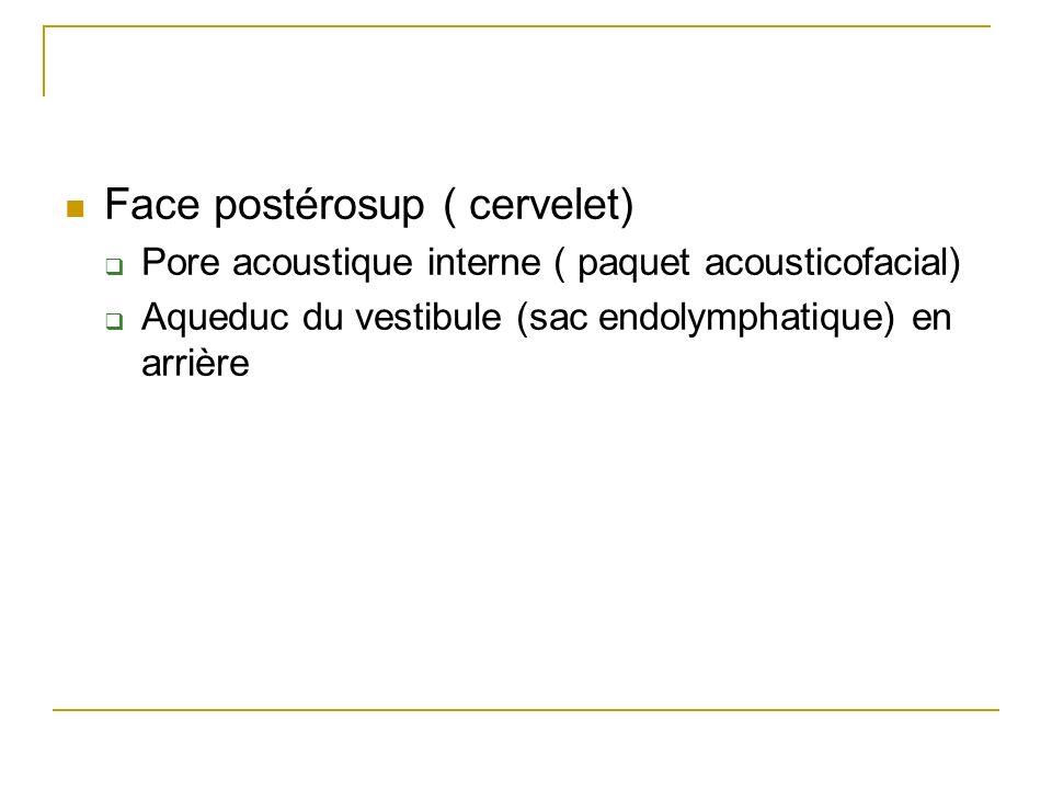 Face postérosup ( cervelet) Pore acoustique interne ( paquet acousticofacial) Aqueduc du vestibule (sac endolymphatique) en arrière
