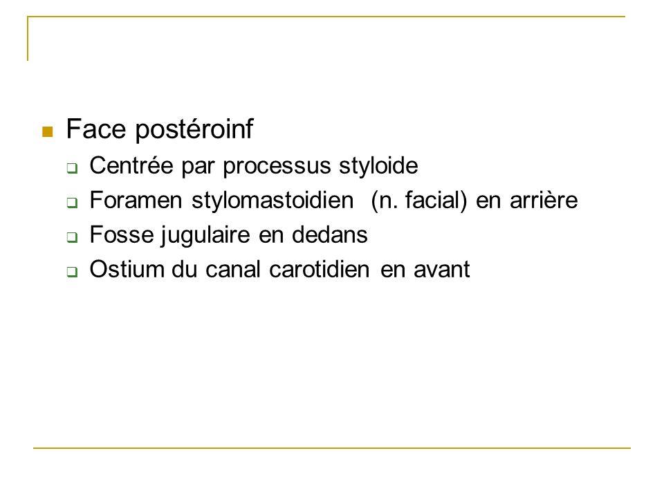 Face postéroinf Centrée par processus styloide Foramen stylomastoidien (n.