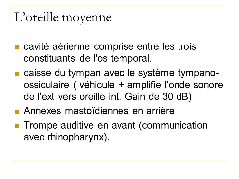 Loreille moyenne cavité aérienne comprise entre les trois constituants de l'os temporal. caisse du tympan avec le système tympano- ossiculaire ( véhic