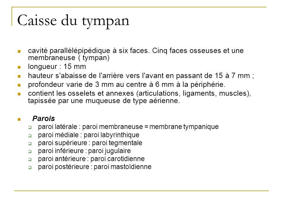 Caisse du tympan cavité parallélépipédique à six faces. Cinq faces osseuses et une membraneuse ( tympan) longueur : 15 mm hauteur s'abaisse de l'arriè