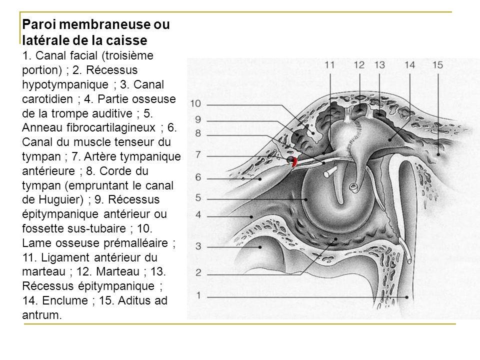 Paroi membraneuse ou latérale de la caisse 1. Canal facial (troisième portion) ; 2. Récessus hypotympanique ; 3. Canal carotidien ; 4. Partie osseuse