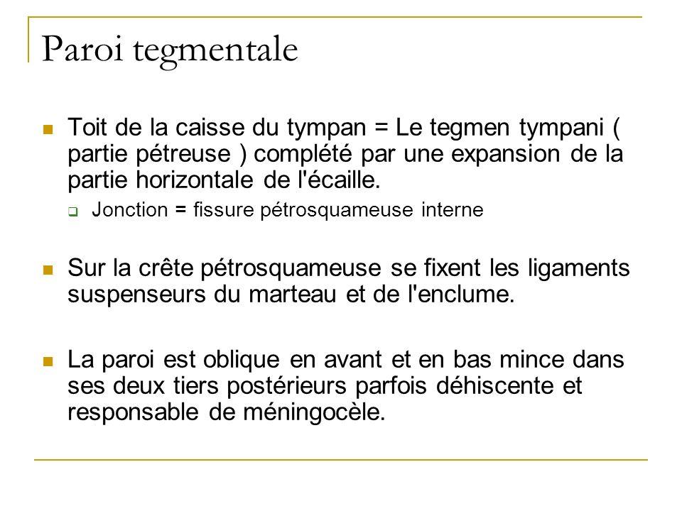 Paroi tegmentale Toit de la caisse du tympan = Le tegmen tympani ( partie pétreuse ) complété par une expansion de la partie horizontale de l écaille.