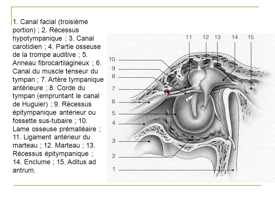 1. Canal facial (troisième portion) ; 2. Récessus hypotympanique ; 3. Canal carotidien ; 4. Partie osseuse de la trompe auditive ; 5. Anneau fibrocart