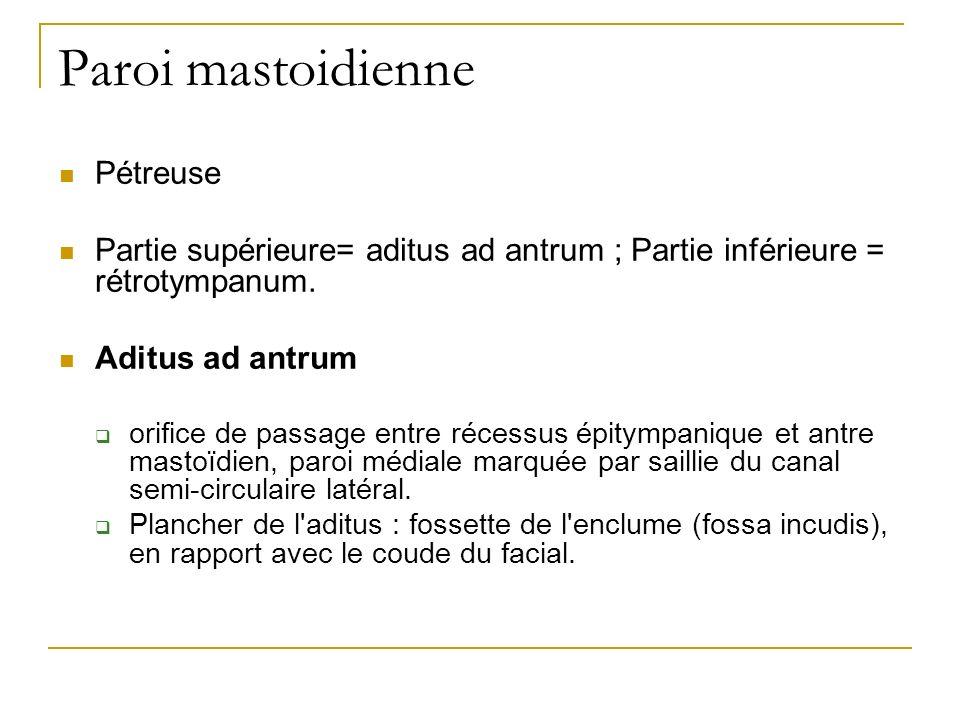 Paroi mastoidienne Pétreuse Partie supérieure= aditus ad antrum ; Partie inférieure = rétrotympanum. Aditus ad antrum orifice de passage entre récessu