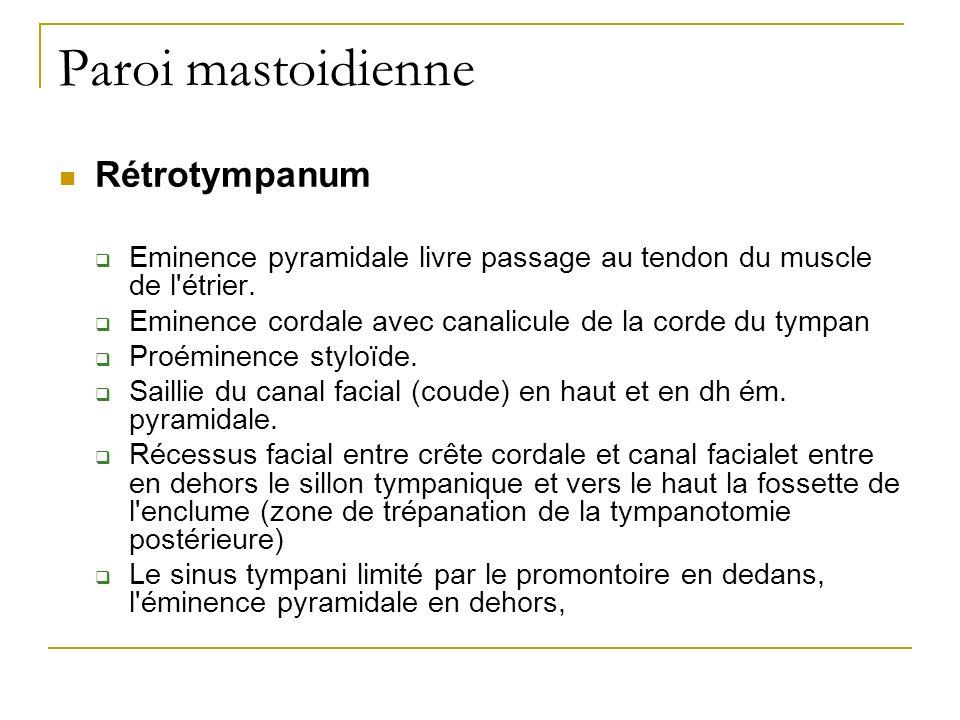 Paroi mastoidienne Rétrotympanum Eminence pyramidale livre passage au tendon du muscle de l'étrier. Eminence cordale avec canalicule de la corde du ty