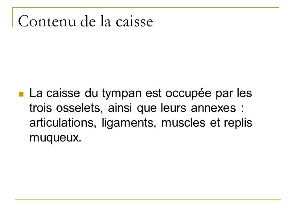 Contenu de la caisse La caisse du tympan est occupée par les trois osselets, ainsi que leurs annexes : articulations, ligaments, muscles et replis muqueux.