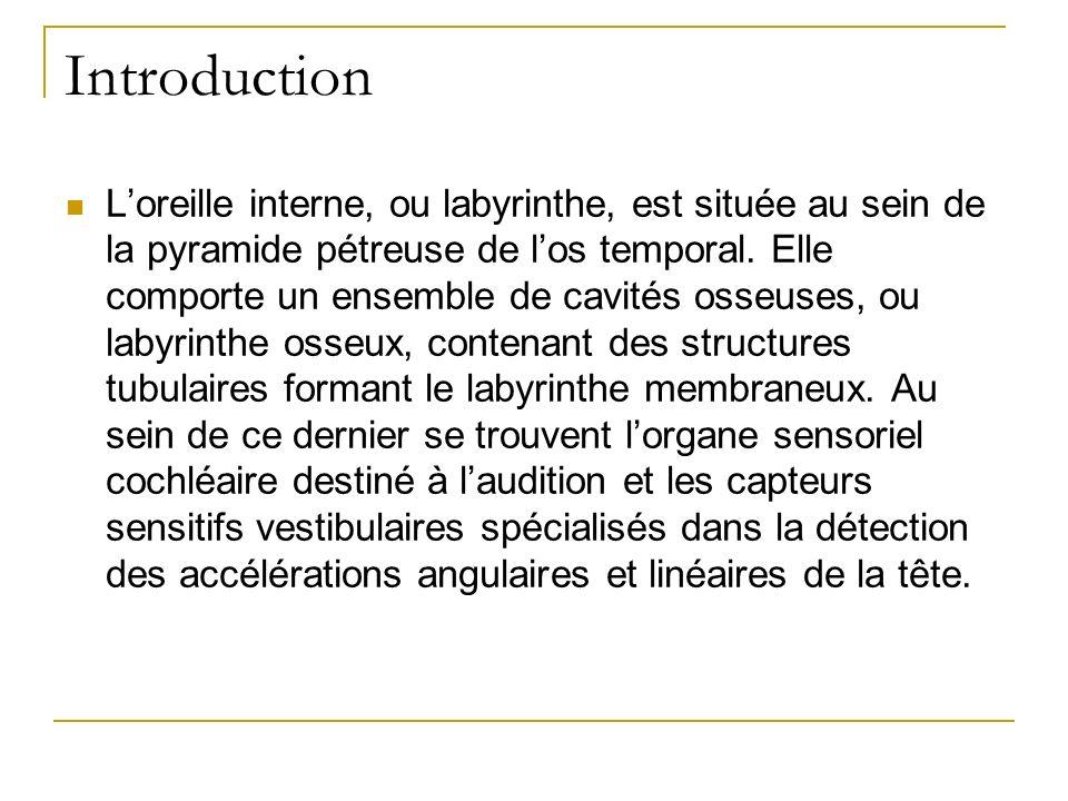 Introduction Loreille interne, ou labyrinthe, est située au sein de la pyramide pétreuse de los temporal. Elle comporte un ensemble de cavités osseuse
