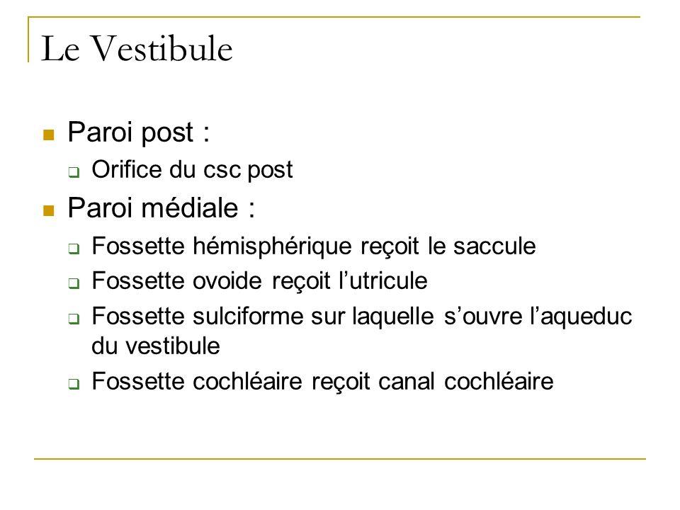 Le Vestibule Paroi post : Orifice du csc post Paroi médiale : Fossette hémisphérique reçoit le saccule Fossette ovoide reçoit lutricule Fossette sulciforme sur laquelle souvre laqueduc du vestibule Fossette cochléaire reçoit canal cochléaire