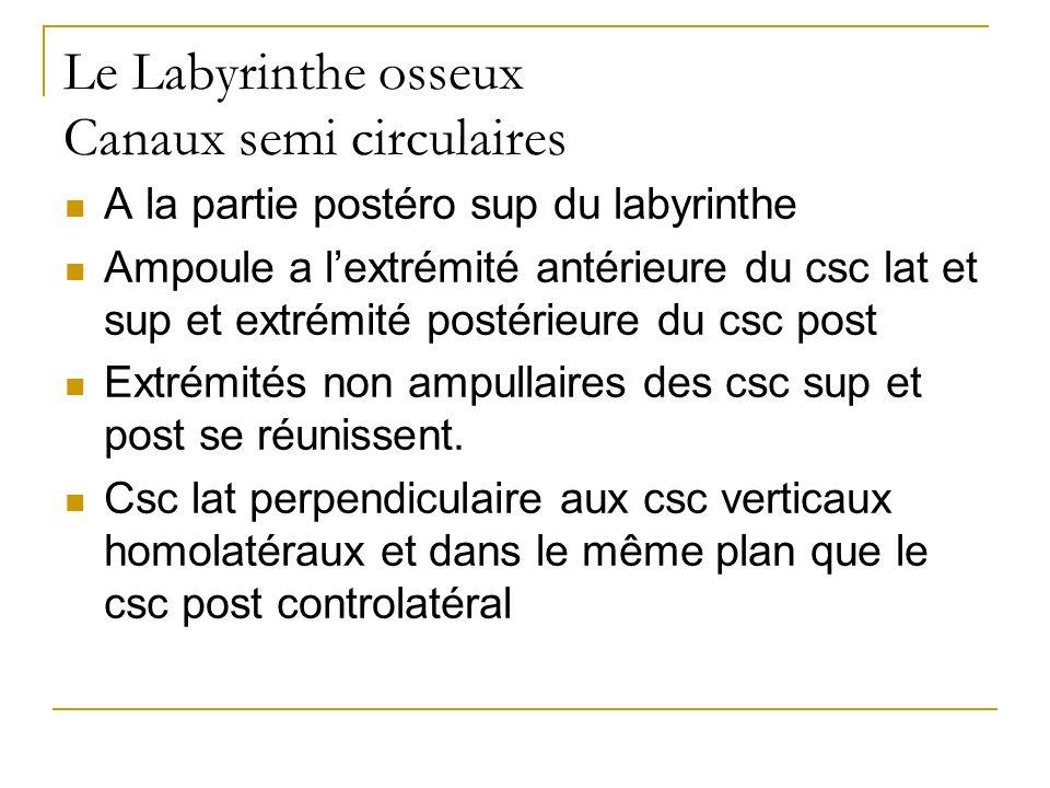 Le Labyrinthe osseux Canaux semi circulaires A la partie postéro sup du labyrinthe Ampoule a lextrémité antérieure du csc lat et sup et extrémité postérieure du csc post Extrémités non ampullaires des csc sup et post se réunissent.
