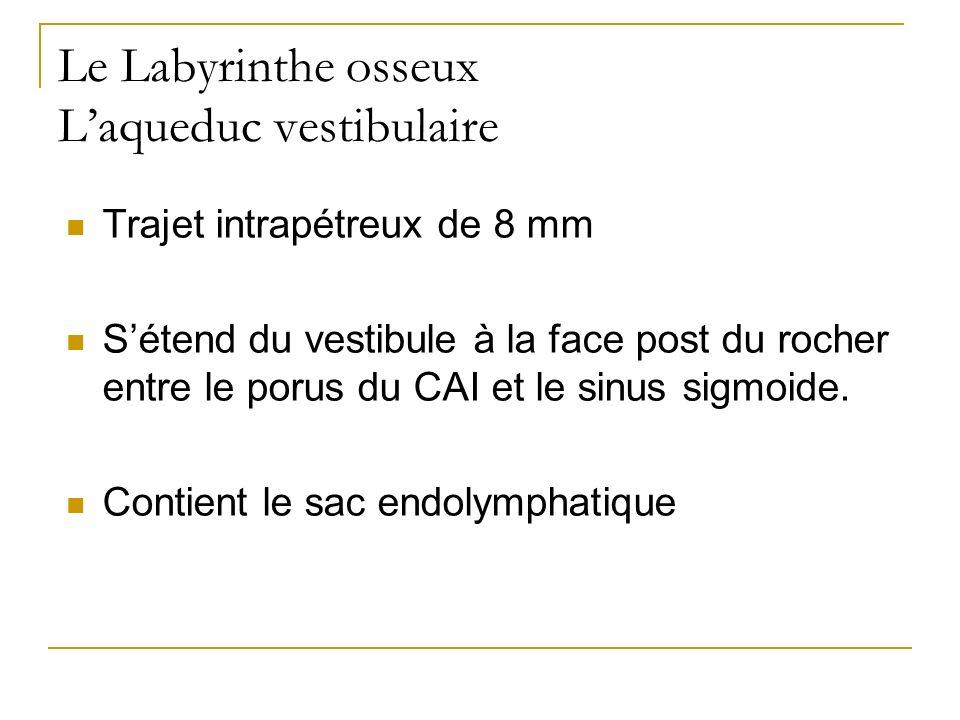 Le Labyrinthe osseux Laqueduc vestibulaire Trajet intrapétreux de 8 mm Sétend du vestibule à la face post du rocher entre le porus du CAI et le sinus sigmoide.