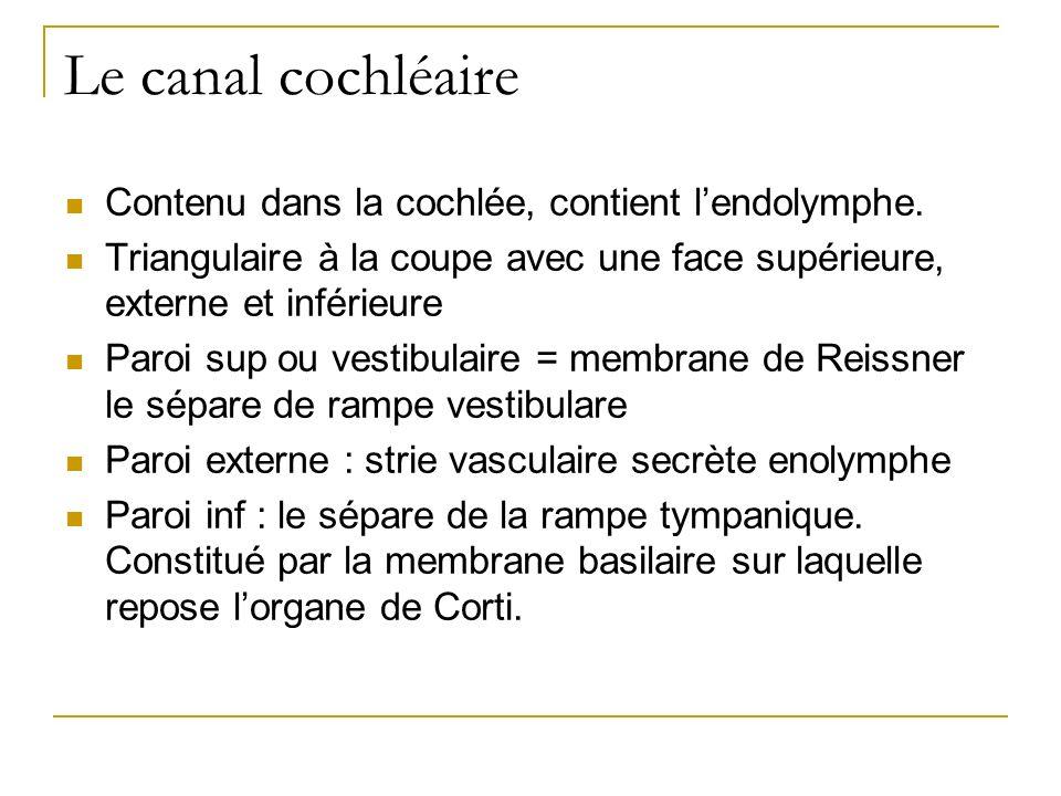 Le canal cochléaire Contenu dans la cochlée, contient lendolymphe. Triangulaire à la coupe avec une face supérieure, externe et inférieure Paroi sup o