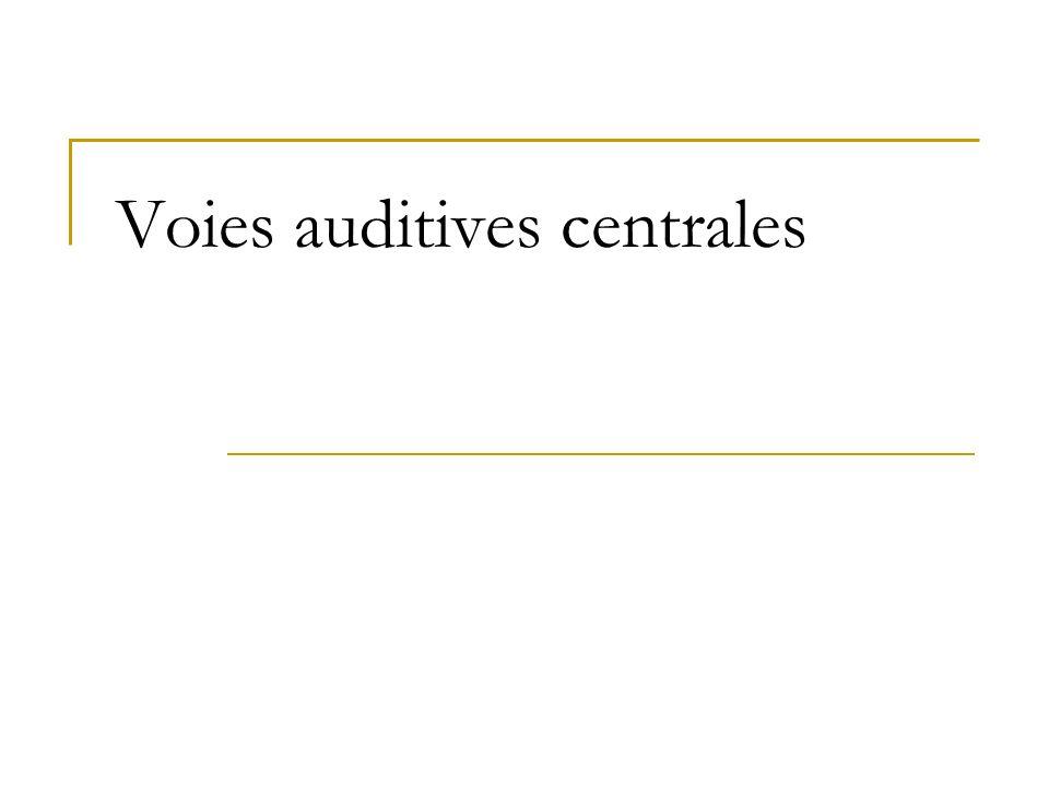 Voies auditives centrales