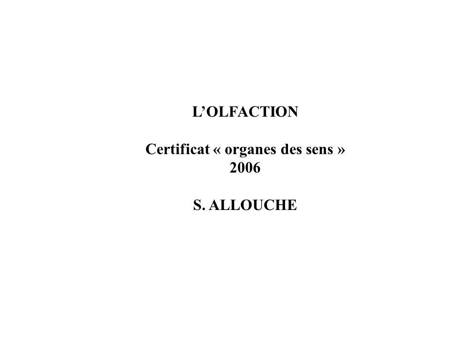 LOLFACTION Certificat « organes des sens » 2006 S. ALLOUCHE