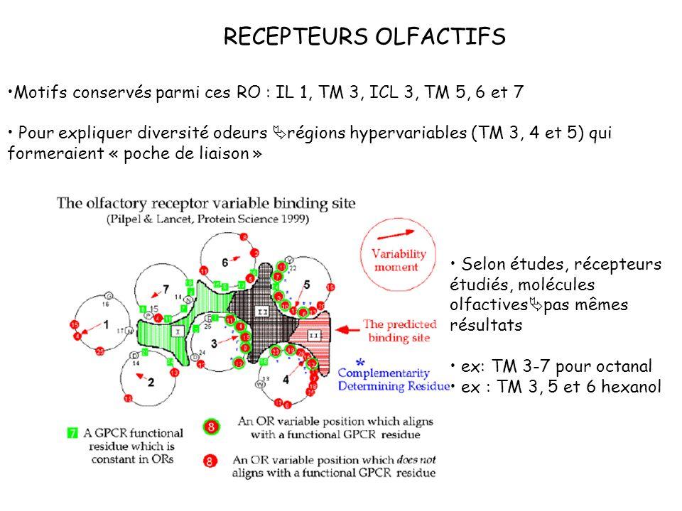 Motifs conservés parmi ces RO : IL 1, TM 3, ICL 3, TM 5, 6 et 7 Pour expliquer diversité odeurs régions hypervariables (TM 3, 4 et 5) qui formeraient