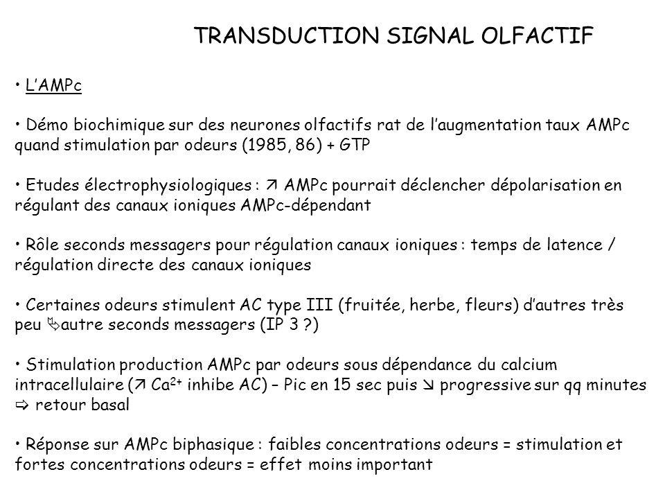 TRANSDUCTION SIGNAL OLFACTIF LAMPc Démo biochimique sur des neurones olfactifs rat de laugmentation taux AMPc quand stimulation par odeurs (1985, 86)