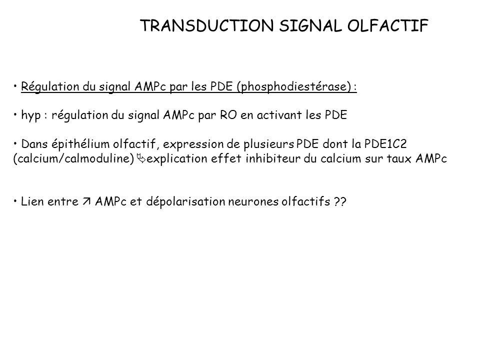 TRANSDUCTION SIGNAL OLFACTIF Régulation du signal AMPc par les PDE (phosphodiestérase) : hyp : régulation du signal AMPc par RO en activant les PDE Da