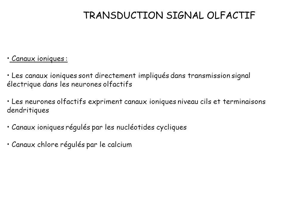 TRANSDUCTION SIGNAL OLFACTIF Canaux ioniques : Les canaux ioniques sont directement impliqués dans transmission signal électrique dans les neurones ol