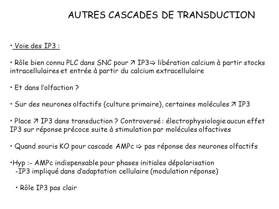 AUTRES CASCADES DE TRANSDUCTION Voie des IP3 : Rôle bien connu PLC dans SNC pour IP3 libération calcium à partir stocks intracellulaires et entrée à p