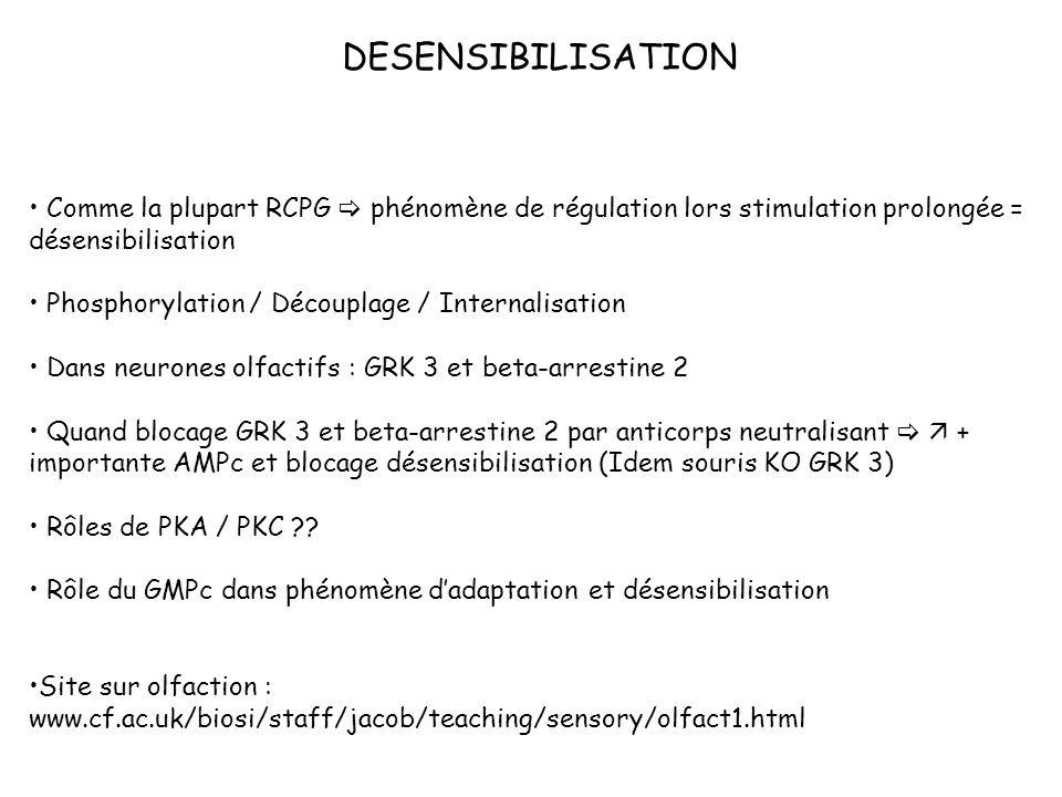 DESENSIBILISATION Comme la plupart RCPG phénomène de régulation lors stimulation prolongée = désensibilisation Phosphorylation / Découplage / Internal