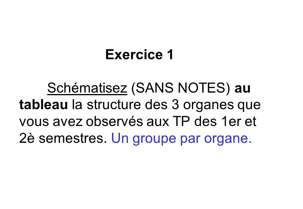 Exercice 1 Schématisez (SANS NOTES) au tableau la structure des 3 organes que vous avez observés aux TP des 1er et 2è semestres. Un groupe par organe.