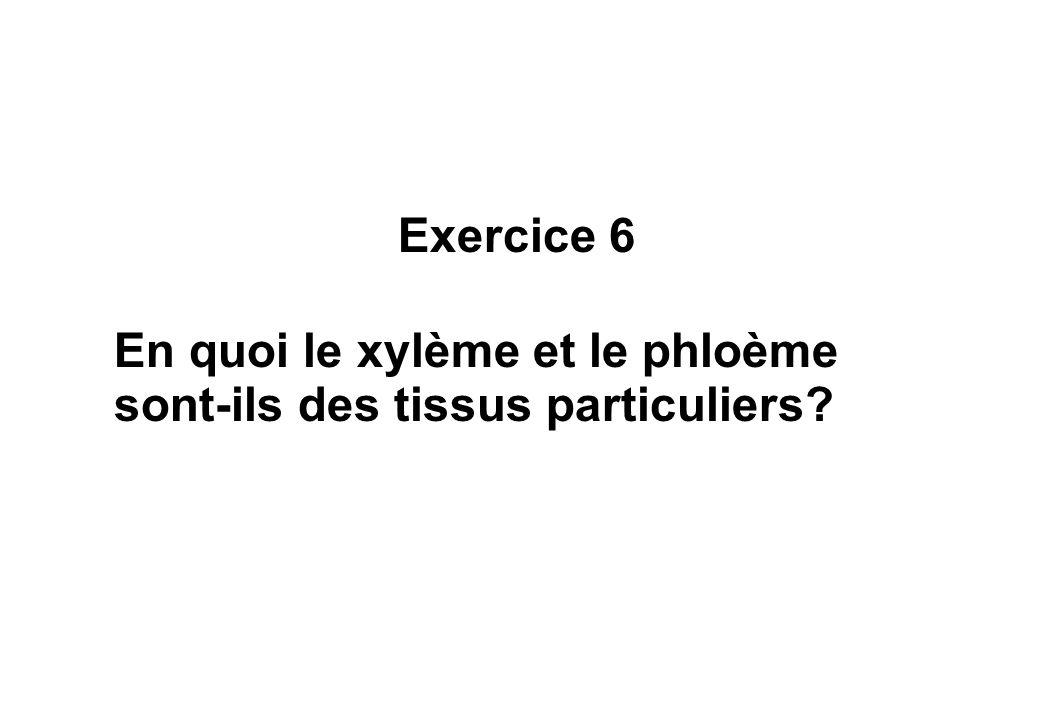 Exercice 6 En quoi le xylème et le phloème sont-ils des tissus particuliers?