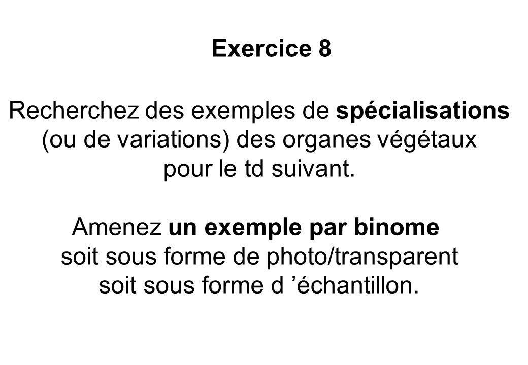 Recherchez des exemples de spécialisations (ou de variations) des organes végétaux pour le td suivant. Amenez un exemple par binome soit sous forme de