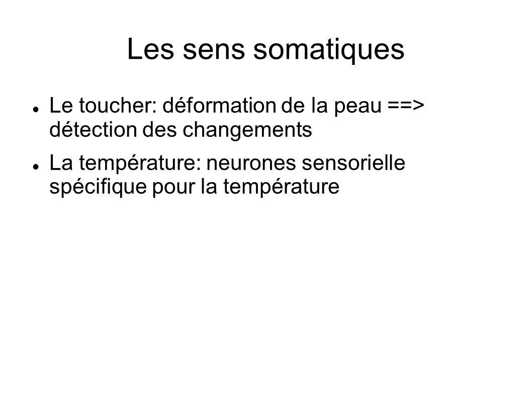 Les sens somatiques Le toucher: déformation de la peau ==> détection des changements La température: neurones sensorielle spécifique pour la températu