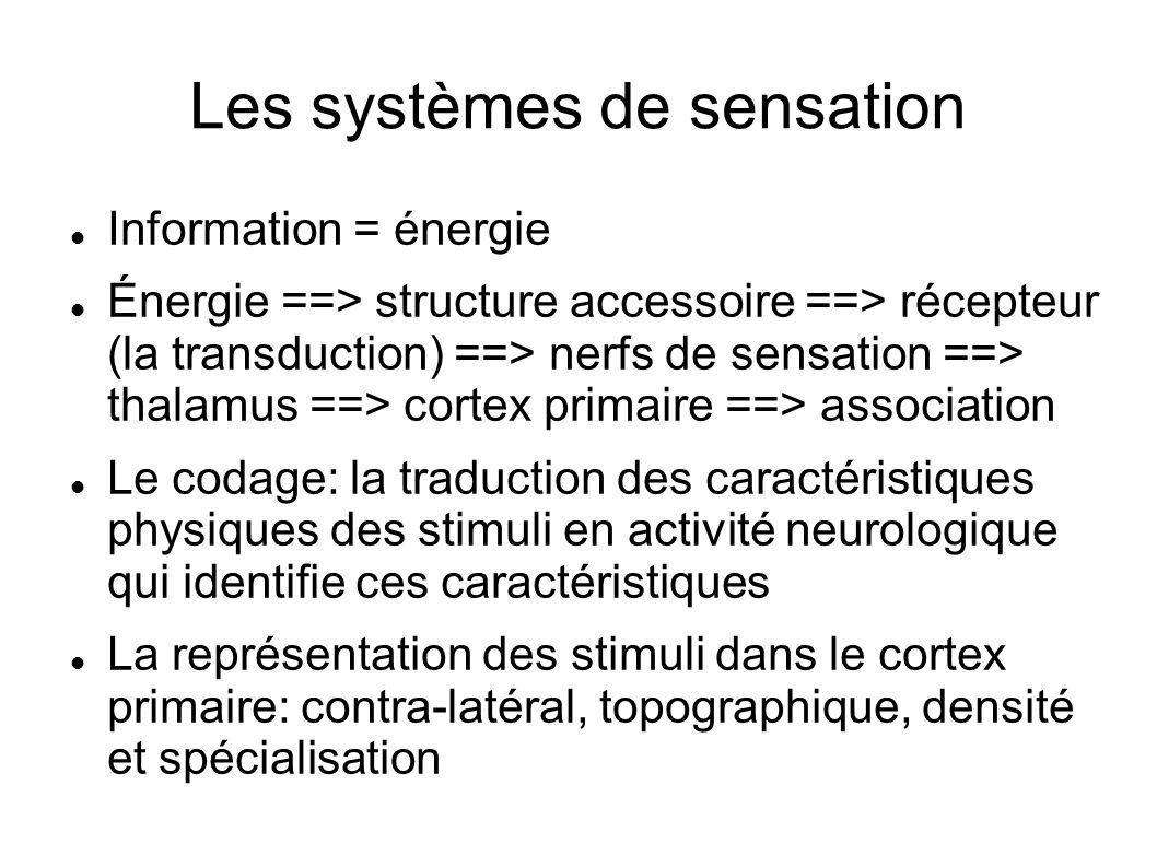Les systèmes de sensation Information = énergie Énergie ==> structure accessoire ==> récepteur (la transduction) ==> nerfs de sensation ==> thalamus =