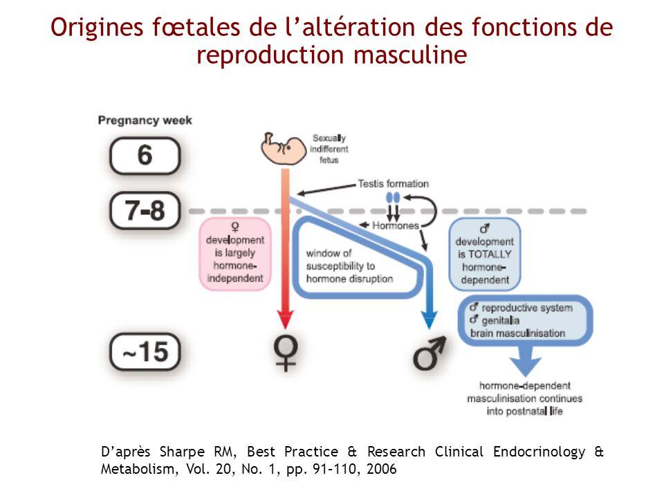 Origines fœtales de laltération des fonctions de reproduction masculine Daprès Sharpe RM, Best Practice & Research Clinical Endocrinology & Metabolism