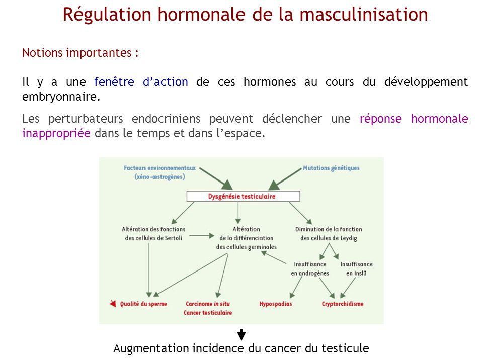 Régulation hormonale de la masculinisation Notions importantes : Il y a une fenêtre daction de ces hormones au cours du développement embryonnaire. Le