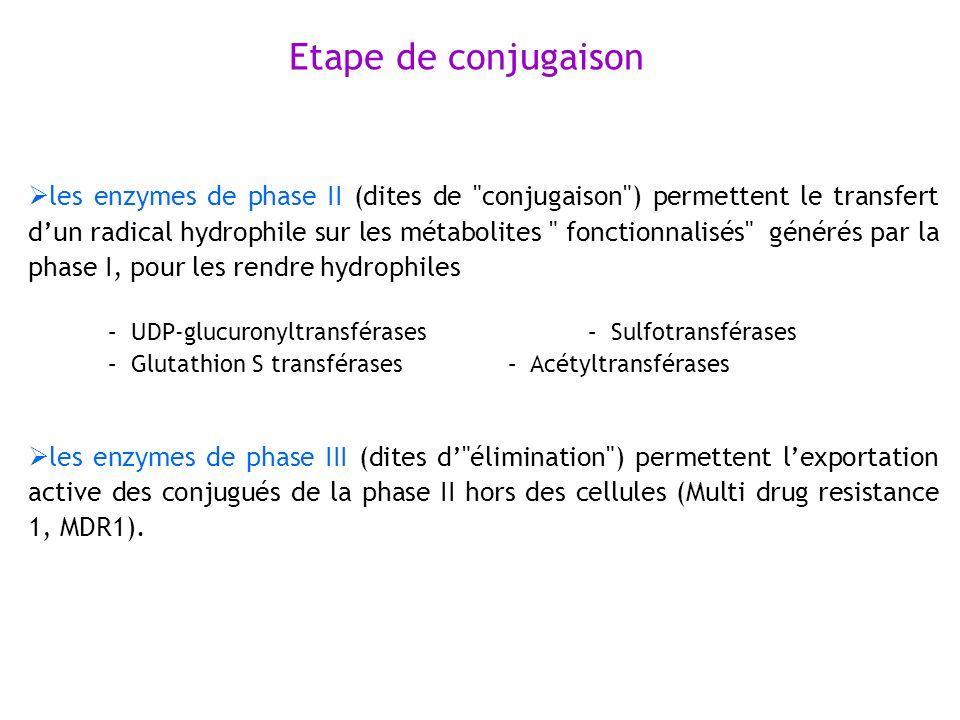 les enzymes de phase II (dites de