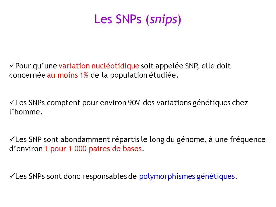 Pour quune variation nucléotidique soit appelée SNP, elle doit concernée au moins 1% de la population étudiée. Les SNPs comptent pour environ 90% des