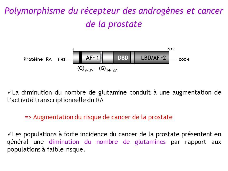 La diminution du nombre de glutamine conduit à une augmentation de lactivité transcriptionnelle du RA => Augmentation du risque de cancer de la prosta