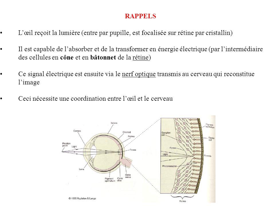 RAPPELS Lœil reçoit la lumière (entre par pupille, est focalisée sur rétine par cristallin) Il est capable de labsorber et de la transformer en énergi