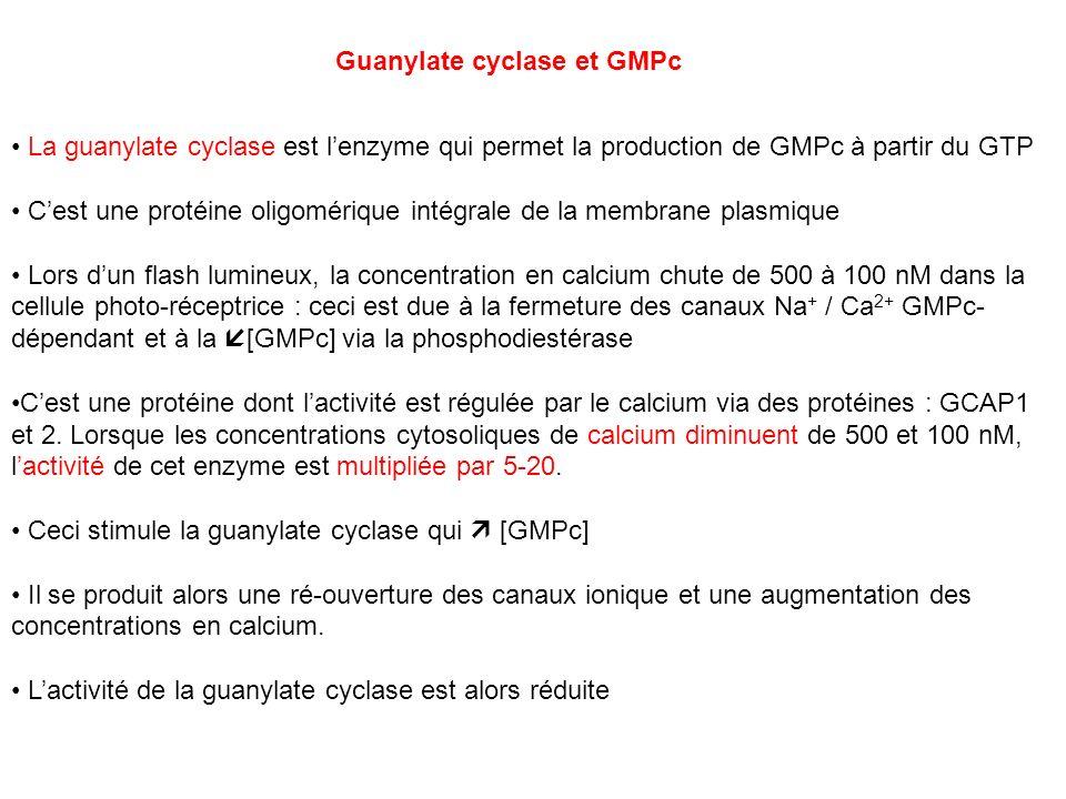 Guanylate cyclase et GMPc La guanylate cyclase est lenzyme qui permet la production de GMPc à partir du GTP Cest une protéine oligomérique intégrale d