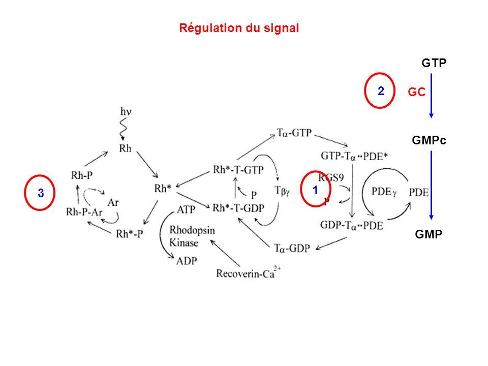 Régulation du signal 1 3 GMPc GMP GTP GC 2