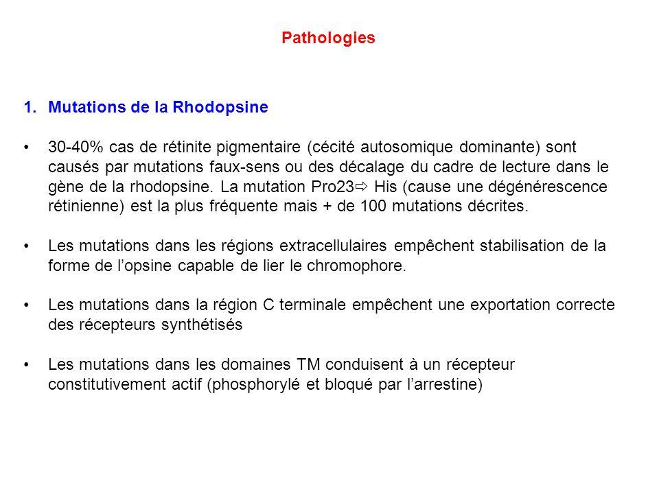 1.Mutations de la Rhodopsine 30-40% cas de rétinite pigmentaire (cécité autosomique dominante) sont causés par mutations faux-sens ou des décalage du