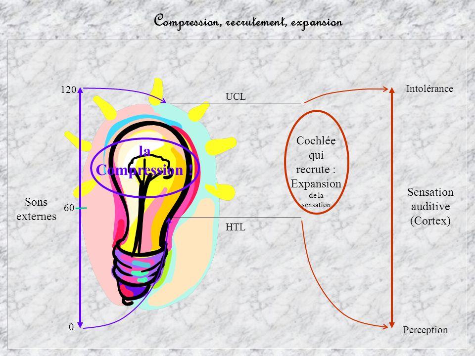 Compression, recrutement, expansion Sons externes Sensation auditive (Cortex) Perception la Compression ! Cochlée qui recrute : Expansion de la sensat