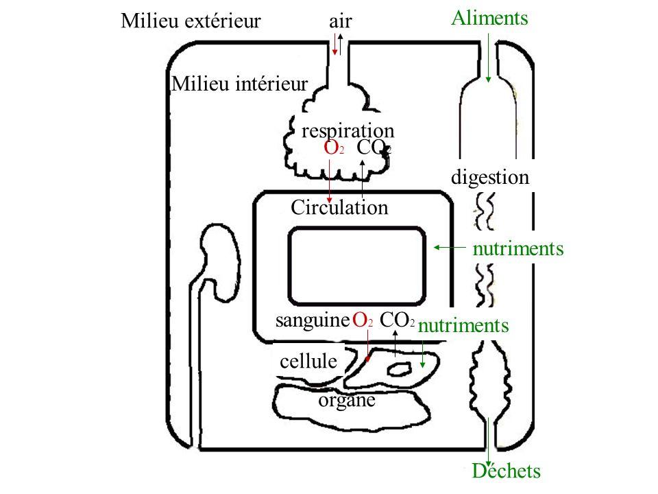 respiration Circulation sanguine organe cellule digestion Milieu extérieur Milieu intérieur air Aliments nutriments Déchets O2O2 O2O2 CO 2