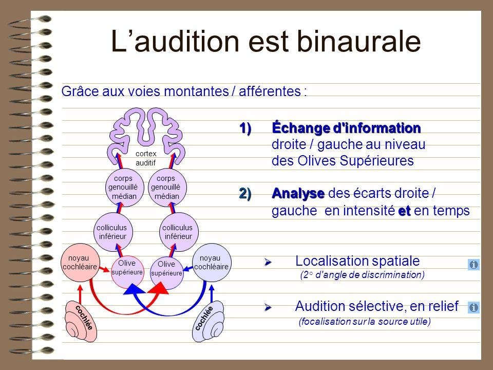 Laudition est binaurale 1)Échange d'information 1)Échange d'information droite / gauche au niveau des Olives Supérieures 2)Analyse et 2)Analyse des éc