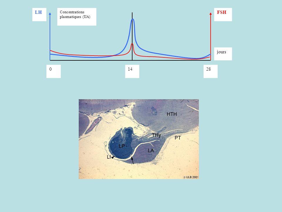 028 jours 14 Concentrations plasmatiques (UA) LHFSH