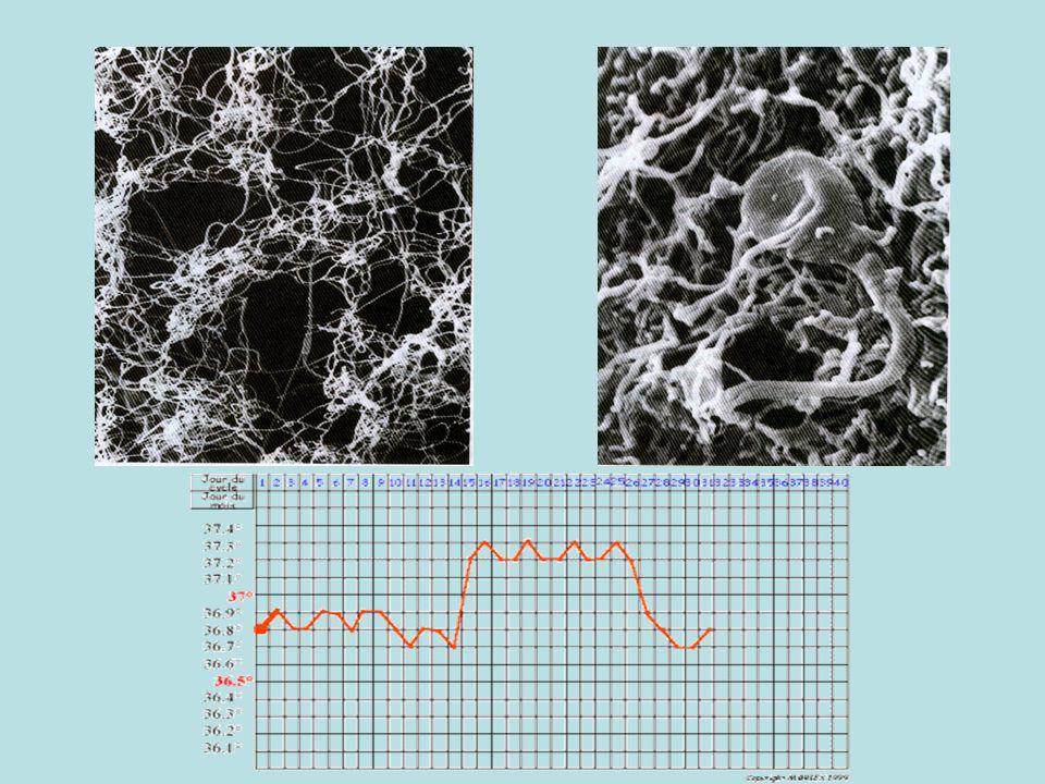 Observations microscopiques TP: observation de coupes dovaires et dutérus Légendes ovaires : - follicule primordial -Follicule primaire -Follicule secondaire -Follicule cavitaire -Follicule mûr (de De Graaf) -Ovocyte -Liquide folliculaire -Cellules folliculaire -Thèque (enveloppe du follicule mûr) Légendes utérus : -Endomètre -Myomètre -Lumière = cavité utérine -Endomètre dentellisé -Vaisseaux sanguins abondants