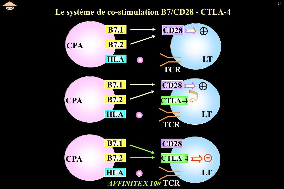 14 AFFINITE X 100 CD28 TCR CTLA-4 CPA HLA B7.2 B7.1 LT CPA HLA B7.2 B7.1 CD28 TCR + LT CPA Le système de co-stimulation B7/CD28 - CTLA-4 HLA B7.2 B7.1